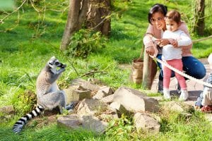 dierenrijk gezin ringstaartmaki