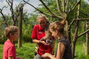 ringstaartmaki voeren dierenverzorger kinderen