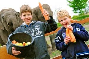 olifant kinderfeestje dierenrijk