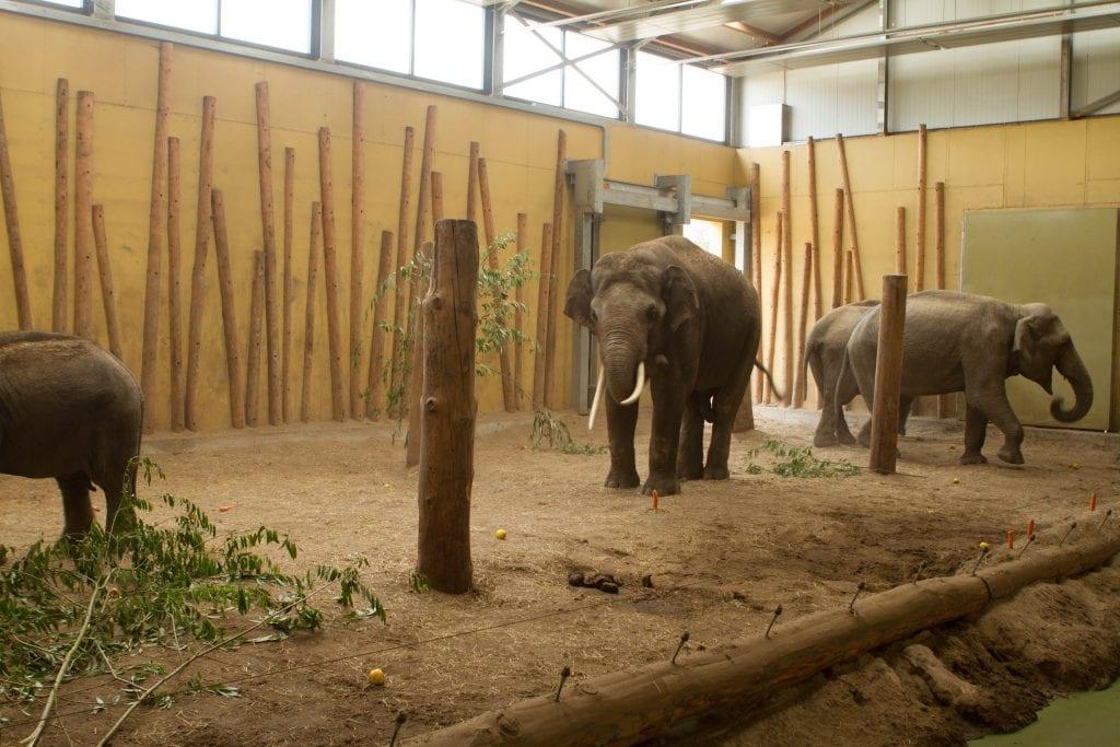 olifantenstal-dierenrijk