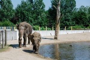 Pasgeboren olifant Jīng