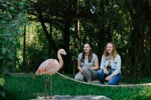 Dierenrijk meisjes en flamingo