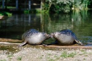 Zeehonden Dierenrijk