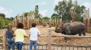 Kids kijken naar neushoorn
