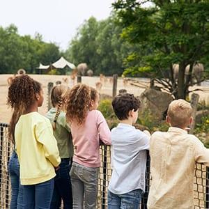 Dierenrijk olifant groep kinderen